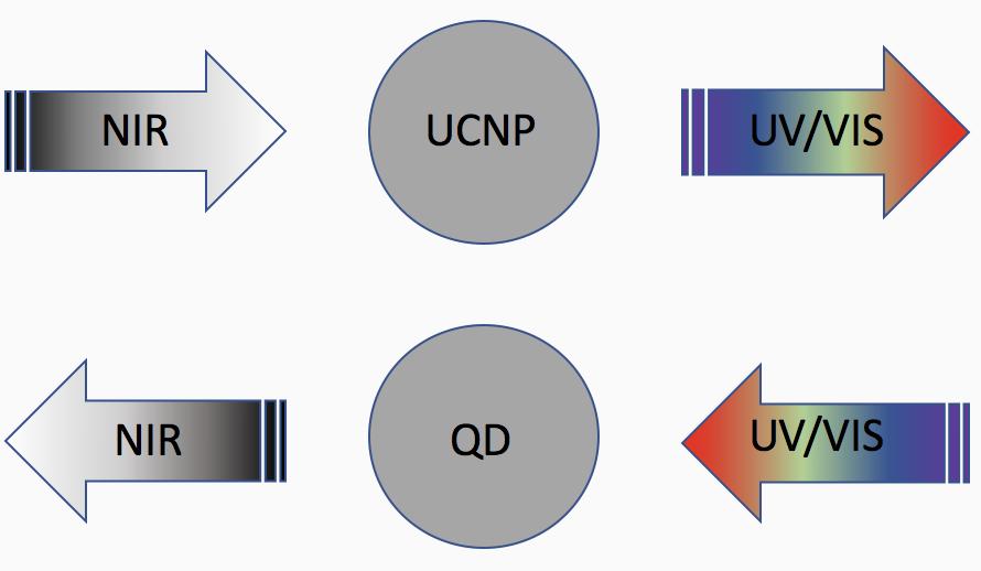 UCNPs_QD