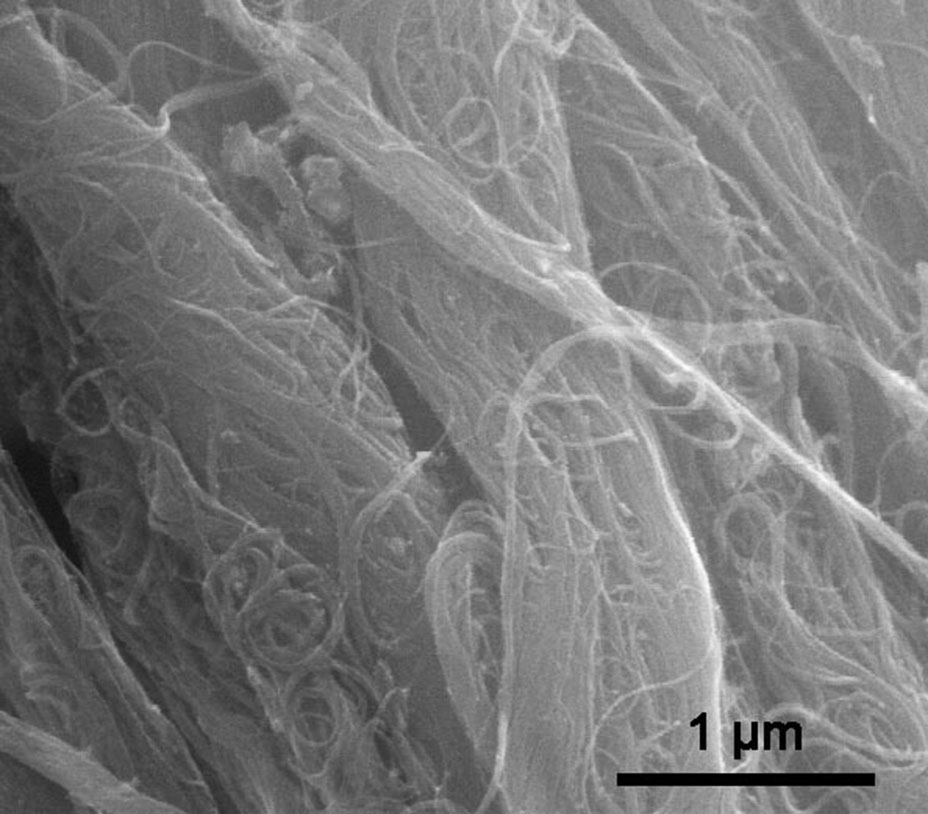 SEM Image of ACS Material Highly Purified SWCNTs (Type A: Length = 1-3 μm)