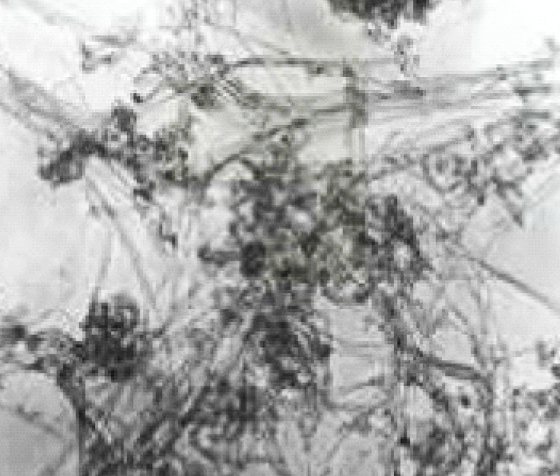 TEM Image of ACS Material Industrial SWNTs (Length = 1-3 μm)