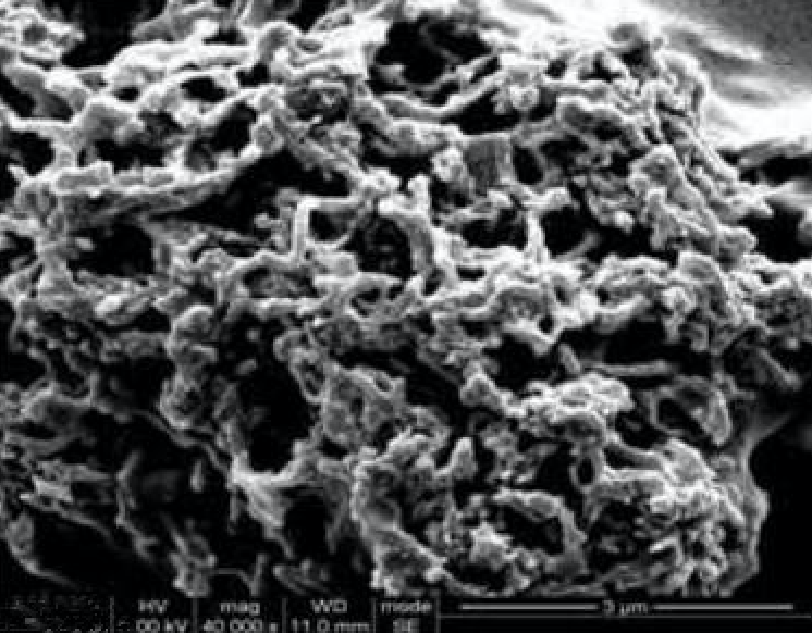 SEM Image of ACS Material Ni-Coated MWNTs