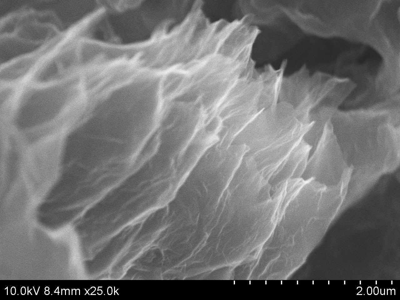 Typical SEM Image of ACS Material Graphene Aerogel/N-doped Graphene Aerogel (1)