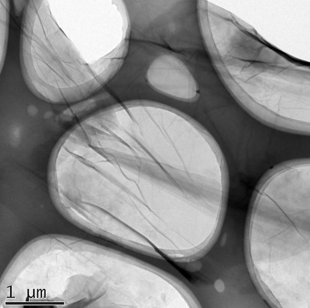 TEM Large Size Graphite Oxide
