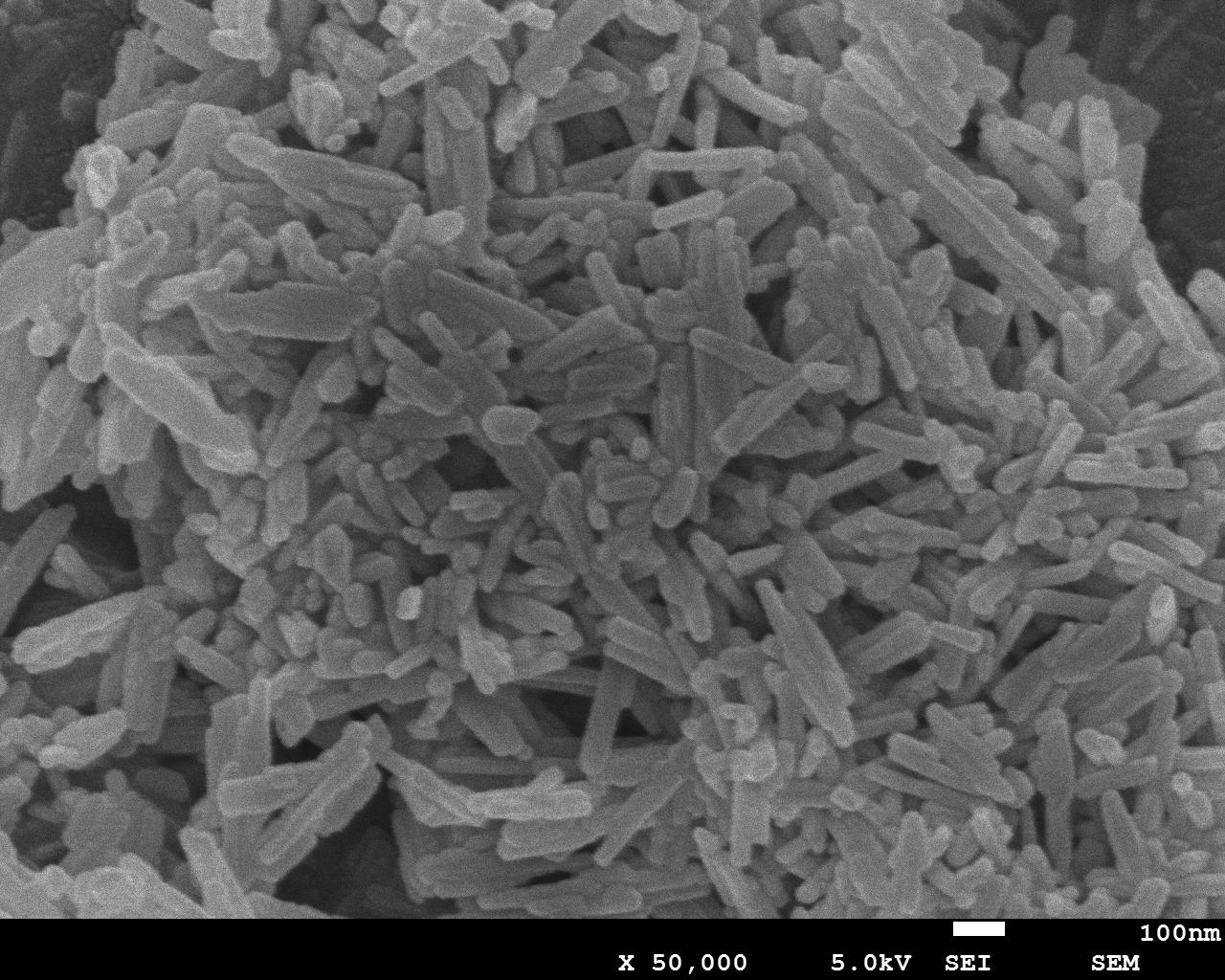 ACS Material ZSM-23 SEM Image